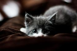 This kitten is super cute but I've seen that look before.  And it was followed by an all out kitten attack!  LOL: Cats, Animals, Kitty Cat, Pets, Kitty Kitty, Adorable, Things, Kittens, Kitties