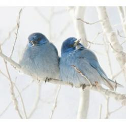 this would make a great painting... love birds for valentines day?: Bluebirds, Animals, Winter, Nature, Beautiful Birds, Blue Birds, Photo