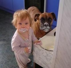 We didn't do it: Animals, Dogs, Cakes, Boxer, Funny Stuff, Humor, Funnies, Kid