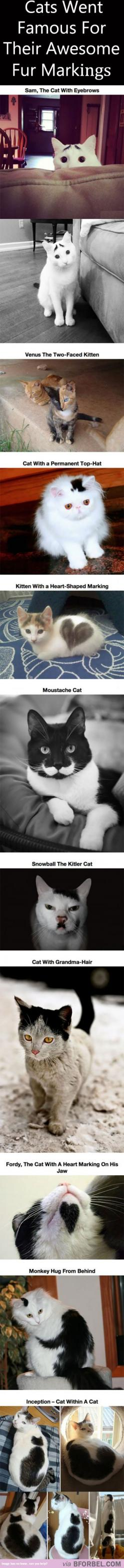 10 Cats That Became Famous For Their Awesome Fur Markings…: 10 Cats, Fur Markings, Crazy Cat, Kitty, Animal, Cat Lady, Awesome Fur