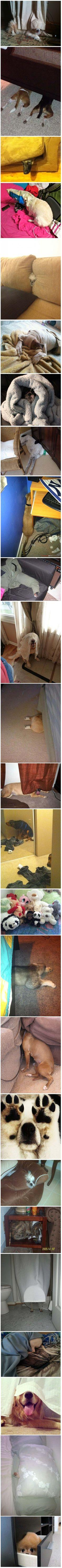 25 Dogs That Suck At Hide And Seek | I Think My Moms Gone CrazyI Think My Moms Gone Crazy: Cuties, Can T, Silly Dogs, Funny, Puppy, Things, 25 Dogs, Case, Animal
