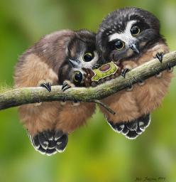 """Nope, it doesn't make much more sense upside down!"" ............... Baby Saw Whet Owls and Saddleback Caterpillar by Psithyrus…: Babies, Animals, Nature, Baby Owls, Creatures, Whet Owls, Saddleback Caterpillar, Birds"