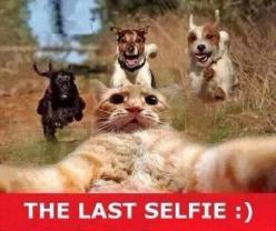 64 Best Funny animal Quotes and Funny Memes: Funny Animals, Selfie, Cats, Funny Stuff, Funnies, Humor, Dog