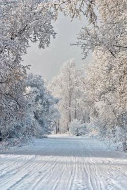 After The Snow Fall All is Silent....a Winter Wonderland - See more about traveling at:  http://travel4yourfreedom.worldventures.biz/: Snow Fall, Winter Snow, Winter White, Winter Wonderland, Snow Scene, Christmas, Road, Winter Scenes