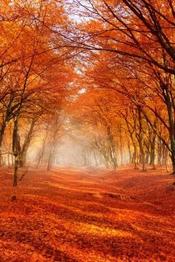 Autumn Forest, Romania photo via ocean: Forests, Orange, Nature, Colors, Autumn Forest, Fall, Trees, Romania, Landscape