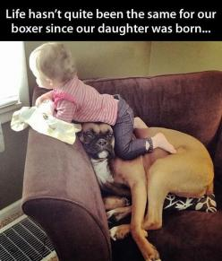 Baby & boxer - This is so cute. What a sweet patient doggy! @Beth Richardson this is so going to be Easton and the dogs :): Animals, Dogs, Pet, Boxers, Funnies, Baby, Funny Animal, Kid
