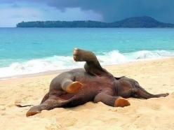 Baby Elephant Playing In The Beach For The First Time: Beaches, Babies, Animals, Baby Elephants