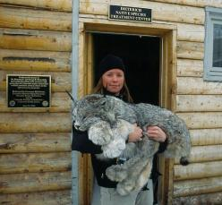 Beautiful Lynx at Colorado's Dieterich Native Species Treatment center. (Yes, he's tranquilized at the moment). Holy moly, look at the size of those paws!: Wild Cat, Animals, Big Cats, Creature, Beautiful, Photo, Canadian Lynx, Big Kitty
