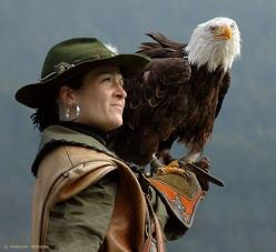 Become a falconer...if it's not too dangerous.: Animal Pics, Eagles Birds, Hawks Falcons, Falconrey Guild, Magnificent Eagles, Eagles Hawks, Raptor, Medieval Falconrey, Bald Eagles