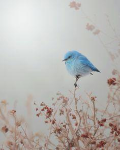 Blue Mountain Mist: Animals, Sweet, Art, Blue Mountain, Birds