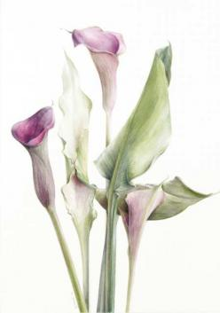 Botanical Paintings by Elaine Searle https://www.pinterest.com/ccclr/botanicals/: Botanical Watercolour, Botanical Watercolor, Botanical Illustrations, Elaine Searle Paintings, Botanical Paintings, Artists Elaine Searle, Watercolor Florals, Botanical Art