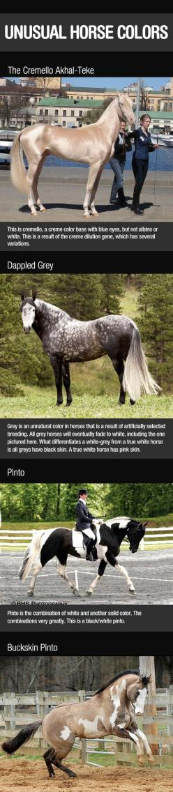 Breathtaking Horse Colors - Click picture once to see many more.: Beautiful Horses, Breathtaking Horse, Unusual Horse, Rare Horse, Dream Horses, Equestrian, Animals Horses