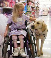 Canine Assistants service dogs assist children and adults with physical disabilities or other special needs in a variety of ways. Some of the tasks our dogs perform include turning lights on and off, opening and closing doors, pulling wheelchairs, retriev