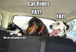Cats are funny.: Cats, Animals, Car Rides, Dogs, Pet, Cars, Funny Animal