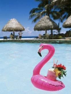 Cook Islands, South Pacific, Rarotonga, Tropical Drink in Pink Flamingo Float Photographic Print by Chris Cheadle at AllPosters.com: Flamingo Float, Cook Islands, Pink Flamingos, Things Flamingo
