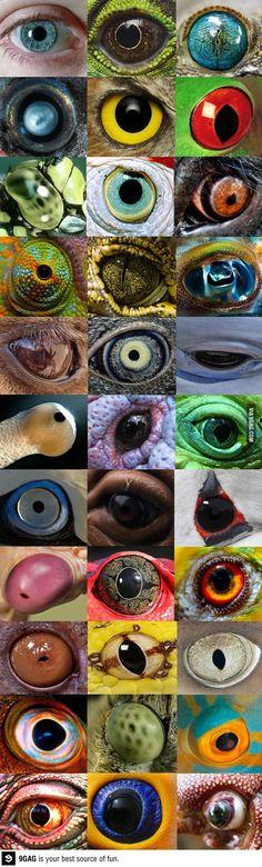 different eyes: Animal Eyes, Nature, Art, Beauty