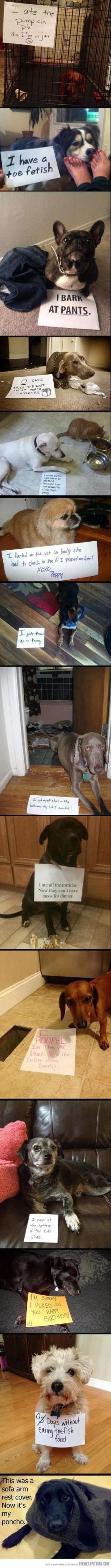 dog shaming at its finest - the last one is my favorite :) I dare you not to laugh!: Giggle, Dog Shame, Dog Shaming, Pet, Puppy, So Funny, Animal