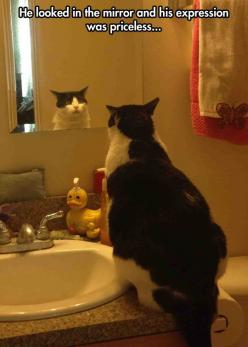 Existential Crisis Cat // funny pictures - funny photos - funny images - funny pics - funny quotes - #lol #humor #funnypictures: Animals, Funny Fat Cat, Funny Cats, Funny Pictures, Funny Weight Gain Quote, Kitty, Cat Lady