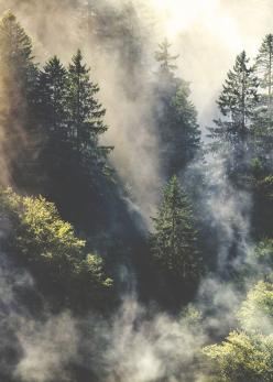 : Forests, Misty Forest, Misty Mountain, Nature, Trees, Places, Photography