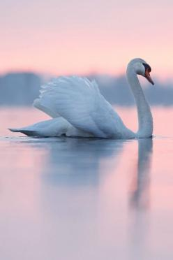 Free as a bird? Never. Human intelligence is far too advanced to ever be free as that of a bird.: Pastel, Beautiful Animals Photography, Beautiful Pictures Of Animals, Birds Swans, Beautiful Birds, Beauty, Beautiful Swans, Pink Bird