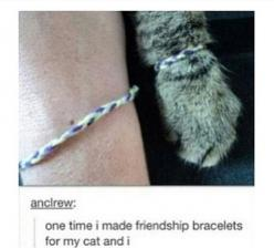 friendship bracelets with a feline friend: Crazy Cats, Cat Friendship, Crazycatlady, Cant, My Life, Crazy Cat Lady, Funny Tumblr Posts, Friendship Bracelets, Can'T Stop Laughing