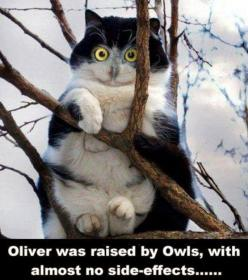 Funny Animal Pictures With Captions: Cats, Animals, Owl, Funny Stuff, Funnies, Humor, Funny Animal