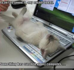 funny kitten: Cats, Computer, Animals, Pets, Funny, Things, Kittens, Kitty, Photo