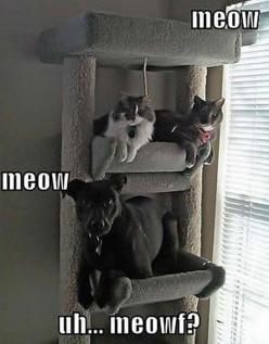 Funny Pictures Of Animals - 20 Pics: Cats, Animals, Dogs, Pet, Funny Stuff, Funnies, Funny Animal