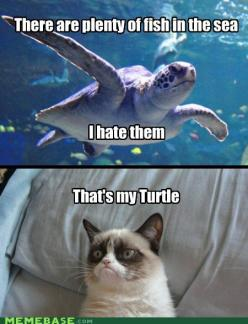 Grumpy Cat + a grumpy Turtle: Cats, Grumpycat, Grumpy Turtle, Funny Stuff, Turtles, Grumpy Cat, Animal
