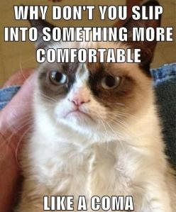 #GrumpyCat #meme For more Grumpy Cat stuff, gifts, and meme visit www.pinterest.com/erikakaisersot: Cats, Funny Cat, Grumpycat, Funnies, Grumpy Cat, Animal, Cat Memes