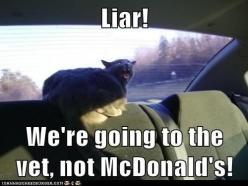 haha   ...........click here to find out more     http://googydog.com: Lolcats Cats, Animals, Funny Cats, Kitty Complaint, Poor Kitty, Funnies, Cats Lolcats, Cat Faces, Funny Memes