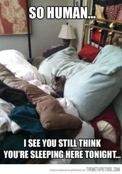 Haha that's so funny: Cats, Animals, Funny Cat, Bed, Funny Stuff, Funnies, Funny Animal, Kitty