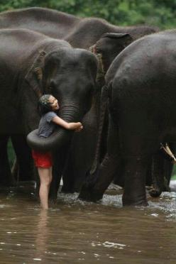 How all relationships between humans and animals should be...: Elephants, Bucket List, Big Hug, Animals, Nature, Elephant, Friend