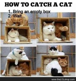How to catch a cat: Cats, Animals, Boxes, Funny, Catch, Crazy Cat, So True, Cat Trap, Cat Lady