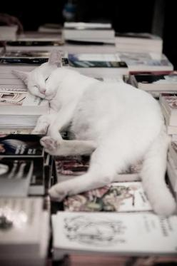 http://inredningsvis.se/ - THE SWEDISH DECOR BLOG: Cats, Animals, Kitty Cat, Cat Nap, Bookstore, Feline, Cat Book, White Cat