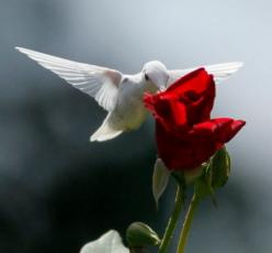 Hummingbird: Humming Birds, Animals, Rare Albino, Red Rose, Beautiful Birds, Albino Hummingbird, Hummingbirds, White Hummingbird