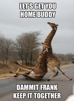 I don't know why this is so funny: Dammit Frank, Animals, Giggle, Drunk Giraffe, Funny Stuff, Humor, Funnies, Giraffes