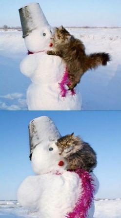 I Loves This Snowman.  Still my favorite!: Cats, Kitty Cat, Animals, Cat Love, Crazy Cat, Snowman, Funny Animal, Friend, Cat Lady