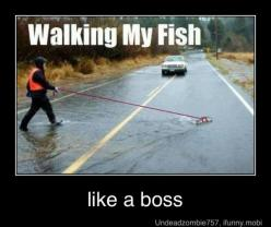 Like a Boss.: Like A Boss, Walking, Fish, Funny Stuff, Funnies, Humor, Funny Animal