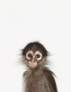 LittleDarlings - Monkey: Babies, Pet, Sharon Montrose, Animal Prints, Baby Monkeys, Things, Baby Animals