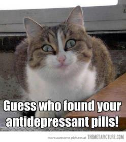 Llllllooooolllll!!!! @Liz Mester Mester Grimler: Cats, Happy Kitty, Giggle, So Funny, Antidepressant Pills, Grumpy Cat, Happy Pills, Animal