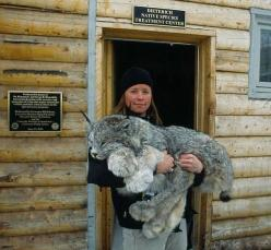 Look at those paws!! This picture is of a Canada Lynx, taken at the Frisco Creek wildlife Hospital and Rehabilitation Center,: Wild Cat, Animals, Big Cats, Creature, Beautiful, Photo, Canadian Lynx, Big Kitty