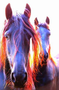 mare at sunset by Cristina Mecklenfeld-Corduneanu: Beautiful Horses, Purple Horses, Horses 3, Pretty Horses, Horses ️, Horse Beauty, Sunset Animals, Animals Horses