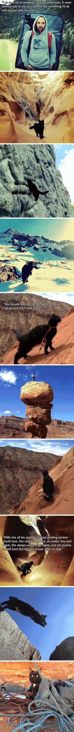 Meet Millie, the mountain climbing cat. | I'm not laughing, but I'm smiling so, so much.