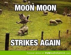 Moon Moon strikes again! If you don't understand this, you'll have to scroll through my board until you see the original story.: Moon Strikes, Moonmoon, Funny Stuff, Moon Memes, Fucking Moon, Dammit Moon, Moon Moon, Humory Ness