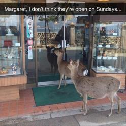 One of the funniest things I've seen in a while :'): Funny Animals, They Re Open, Funny Pictures, Funny Stuff, Humor, Funnies, Deer
