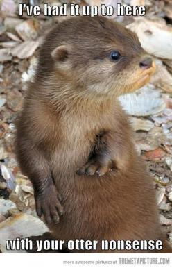 Otters are just way to freaking adorable for their own good.: Animals, Giggle, Otter Nonsense, Stuff, Baby Otters, Funny, Things, Smile