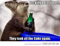 Poor otters lol: Animals, Polar Bears, Fucking Polar, Otters, Seneca Park, Funny Stuff, Funnies
