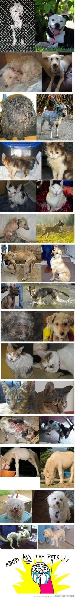 Rescued animals: before and after!: Rescue Dogs, Animal Rescue, Adoption, Animal Rights, Animal Cruelty, Pets, Animal Abuse