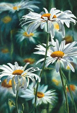Shasta Daisy Fine Art Reproduction Watercolor Paper by ssfreeman43,: Art Reproduction, Daisy Painting, Art Watercolors, Fine Art Painting, Shasta Daisies, Watercolor Flowers, Art Flowers, Freeman Watercolor